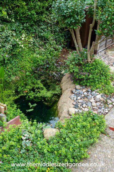 mini pond dug into garden