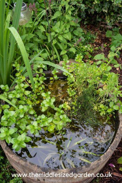 Mini ponds in a barrel