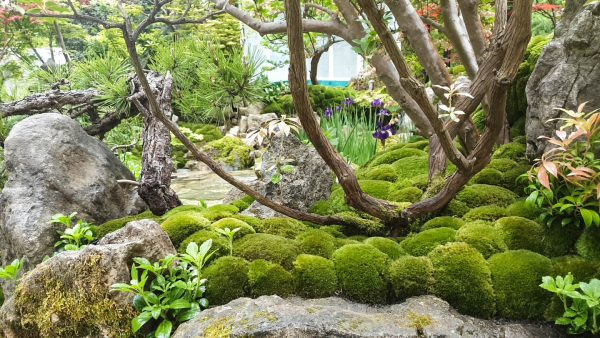 Moss can be beautiful in small town gardens