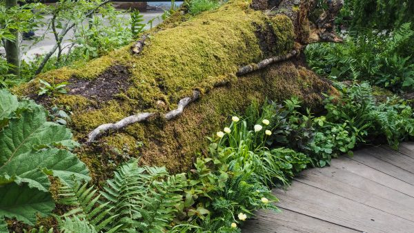 Naturalistic planting ideas for small gardens