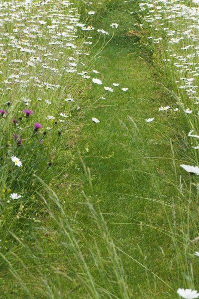 Mown garden path