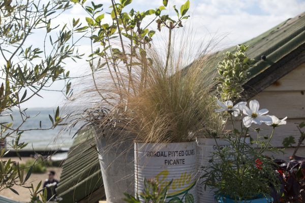 Use recycled pots in a seaside garden