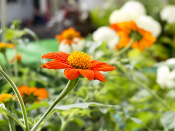 You'll get a plant list in your garden appraisal.