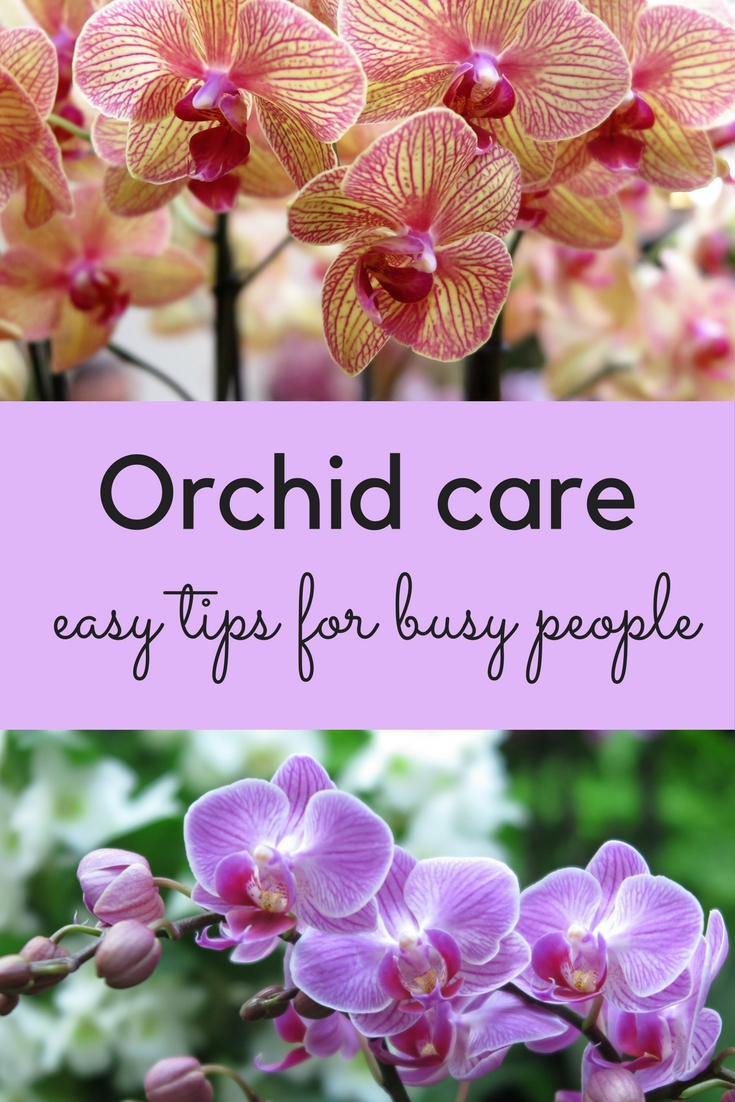 Orchid Care How To Stop Feeling Guilty And Love Your Orchid The Middle Sized