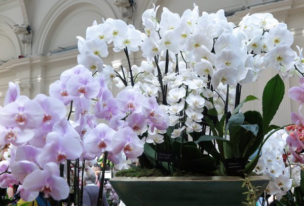 Fill a bowl with lots of white orchids