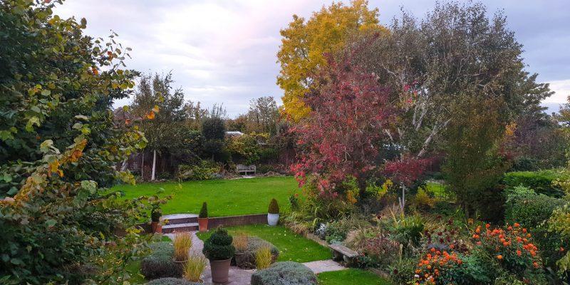 The feel-good November garden to-do list