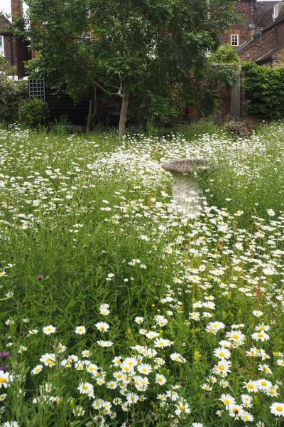 Meadow garden ideas and plants for small gardens or backyards #backyard #gardentips