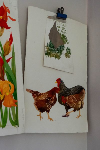 Bantam hens painted by Elizabeth Bradley