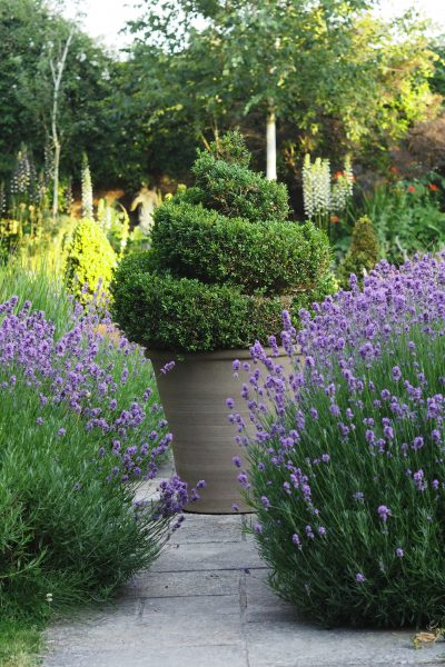 Brilliant low-maintenance plants for fuss-free gardens