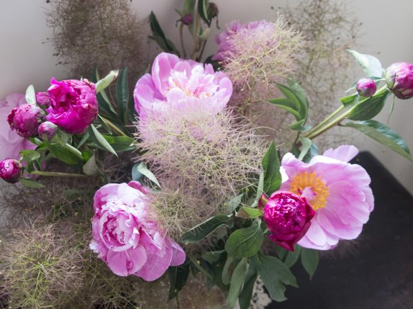 Cotinus and peonies