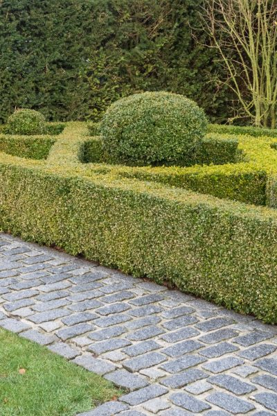 Topiary knot garden