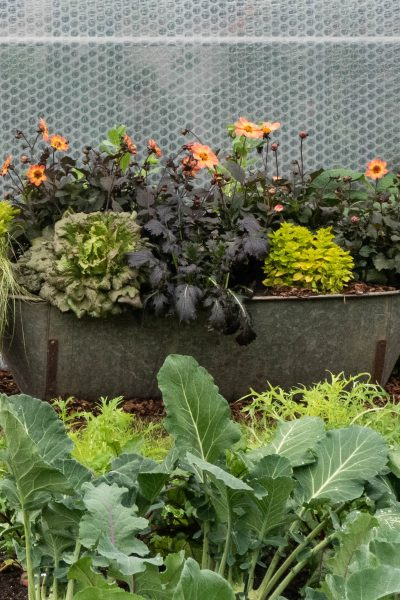 Grow fruit, veg and flowers in the same beds