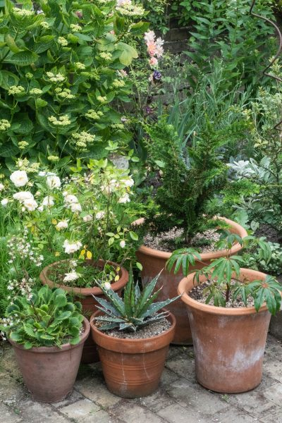 Mixed collection of evergreen pots