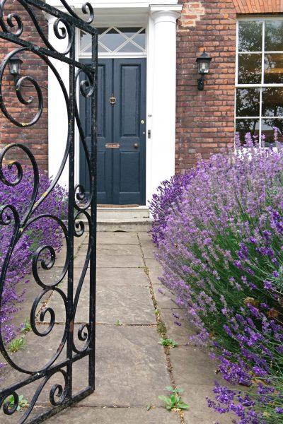 A lavender path