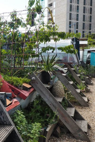 Grow fruit and veg in skips at the Skip Garden