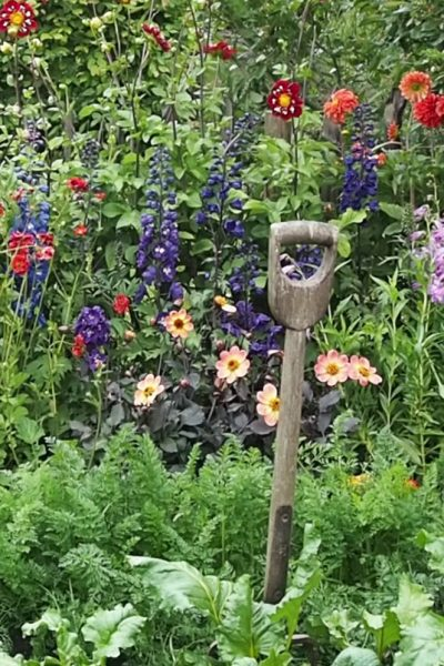 Mix flowers and vegetables in cottage garden planting