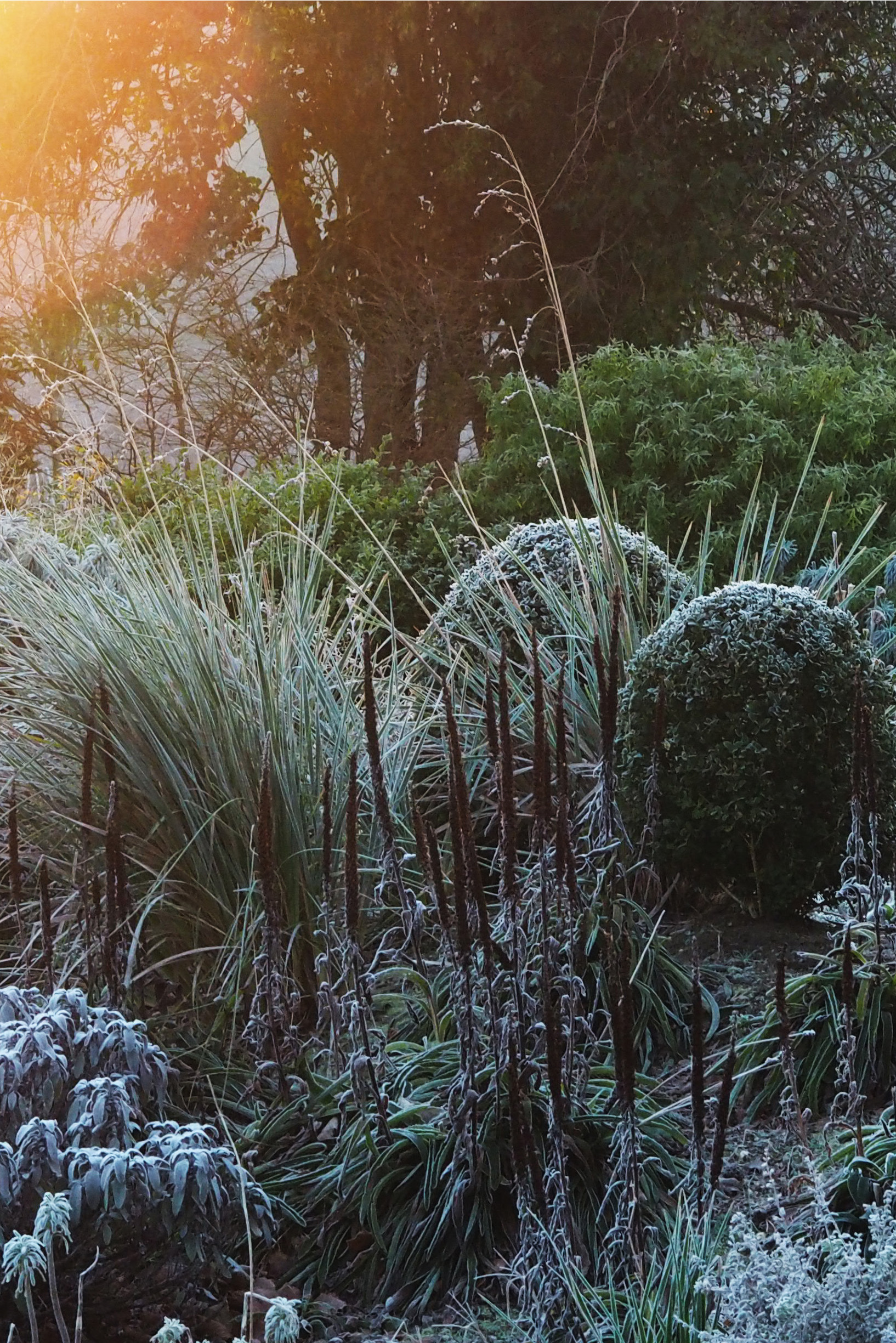 How to deal with frost damaged plants