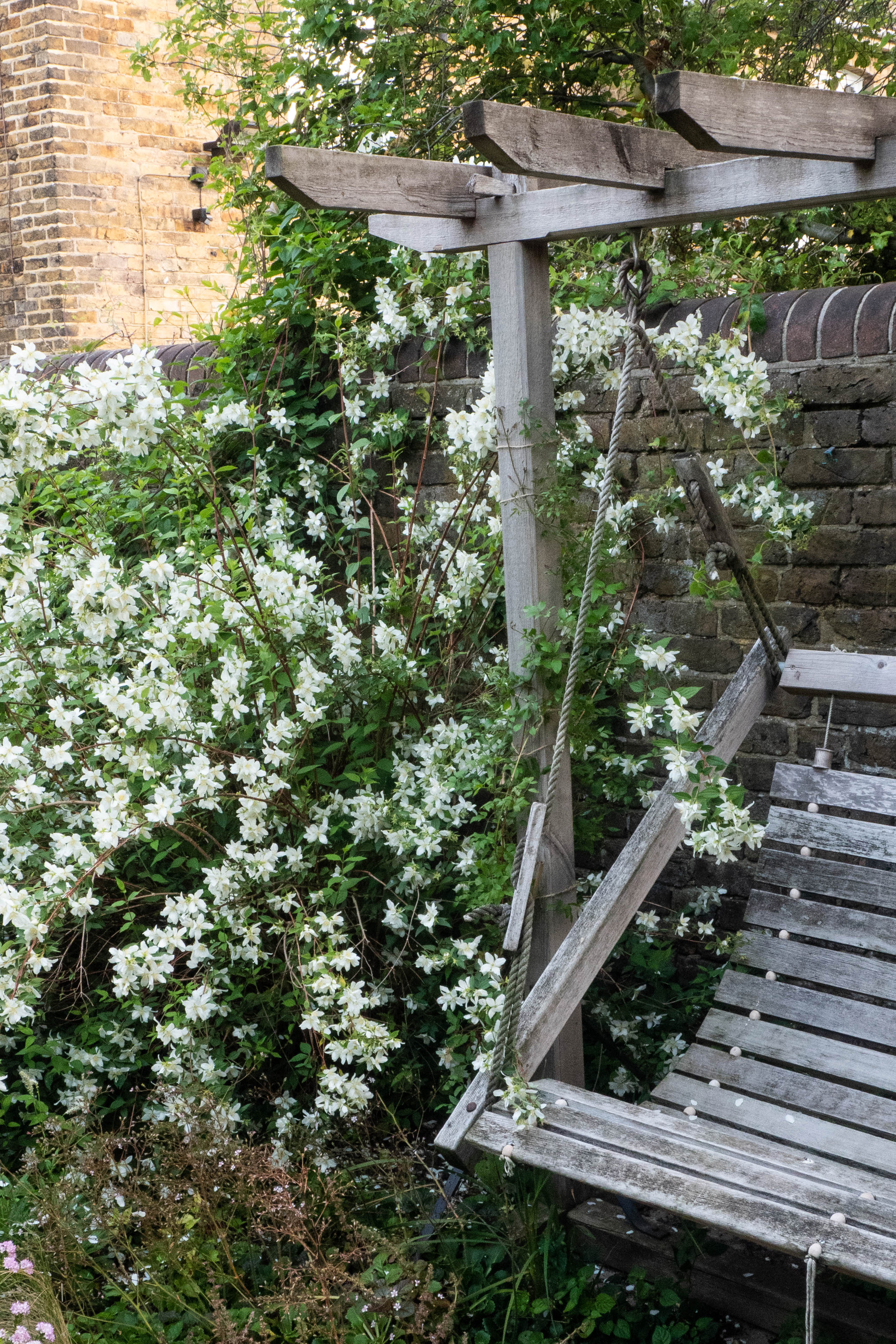 20 small garden planting ideas that really work   The Middle Sized ...