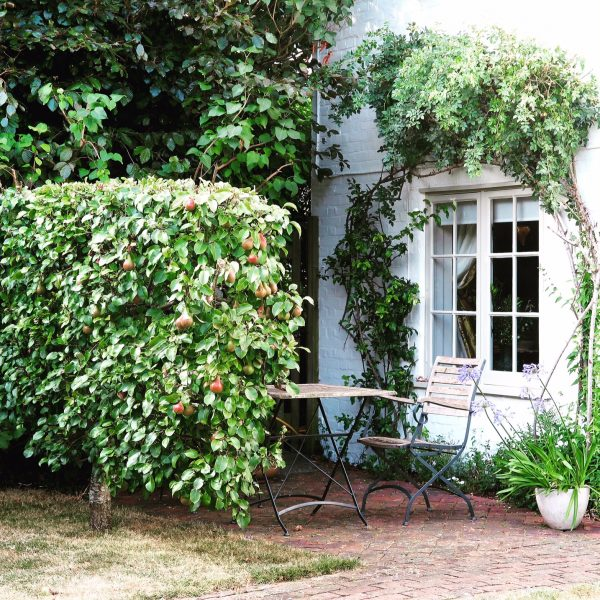 Grow fruit trees as a privacy screen