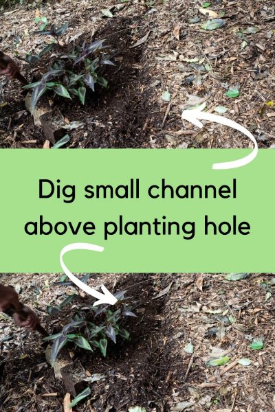 how to plant on a slope with a small ditch