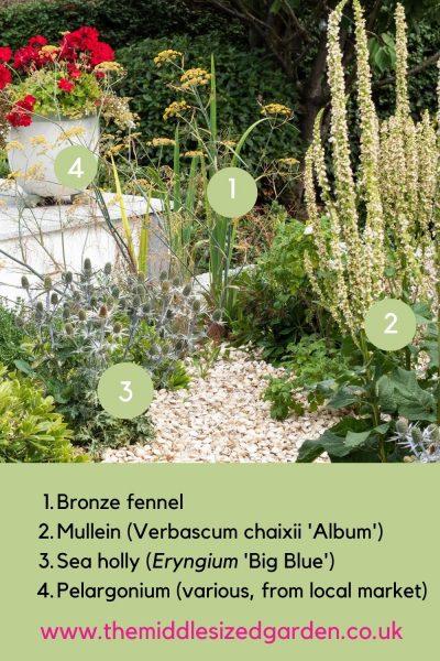 Pelargoniums for seaside garden pots