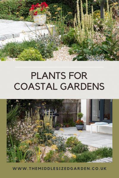 coastal garden plants
