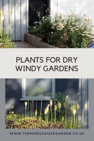 Plants for dry windy gardens