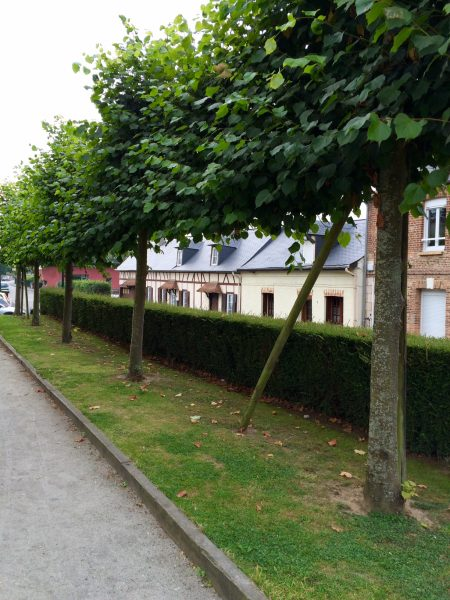 Hedges make streets less polluted