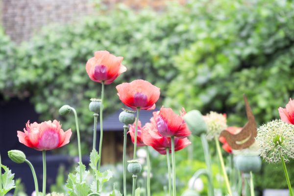 A garden appraisal to improve your garden