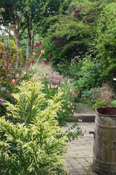 Use shrubs as an anchor plant