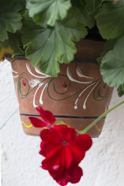 Water saving garden tips for pots #gardening