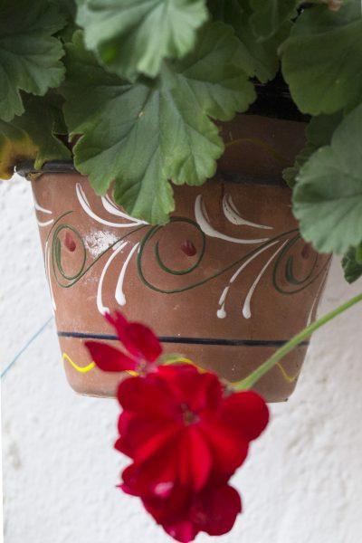 Water saving garden tips for pots #gardening