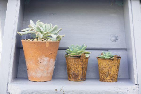 Succulents work well in seaside gardens