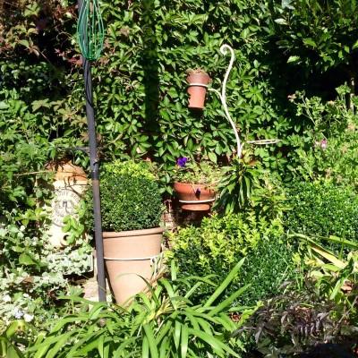 Plants in pots need to be replaced regularly