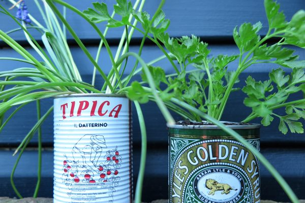 Recycle old tins to use as planters