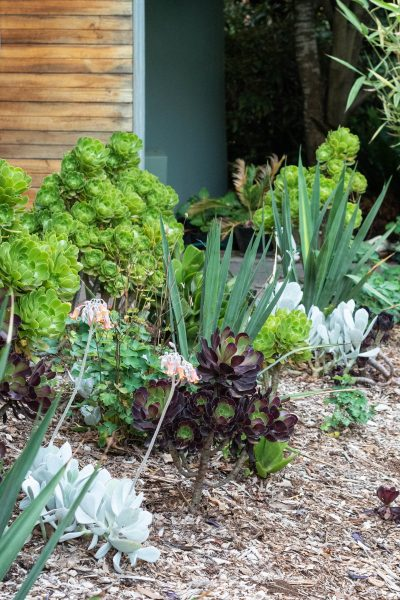 mixed dry garden planting