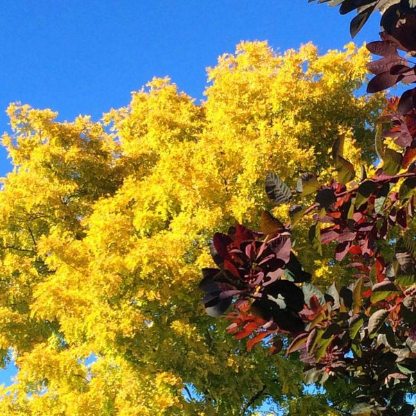 Consider beautiful leaf colours and contrasts