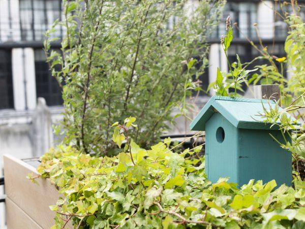 Rooftop birdbox