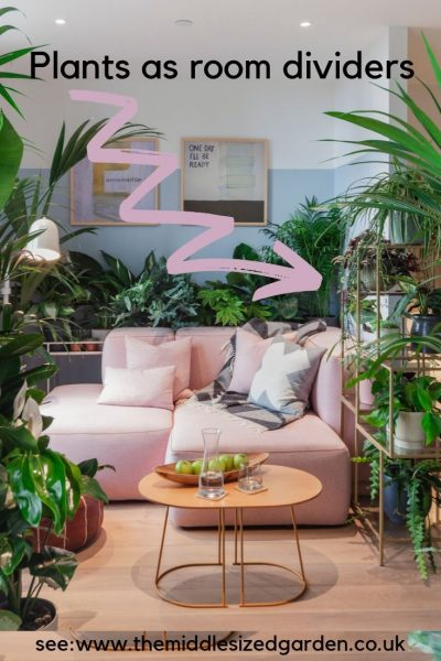 Use indoor plants as room dividers