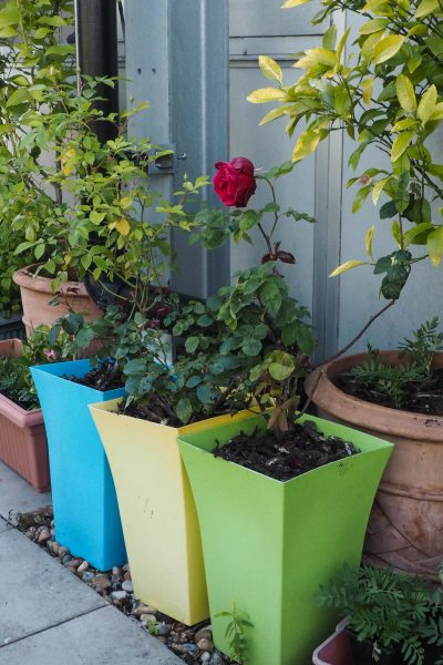 Container planting for roof gardens