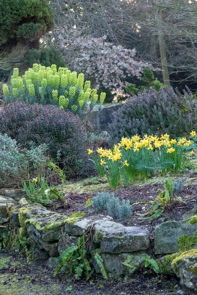 Hebes and euphorbia with bulbs