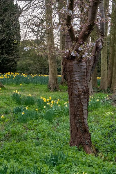 Plant spring bulbs in woodland
