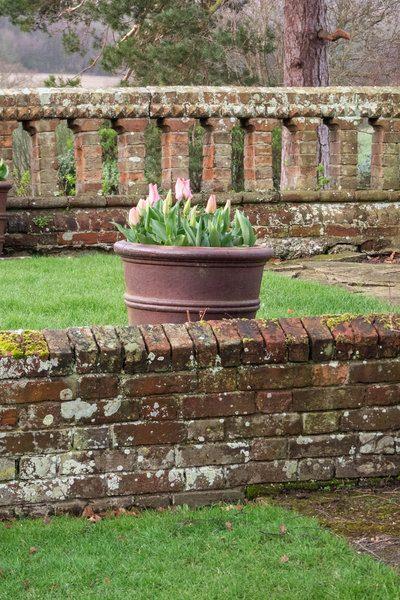 Tulips in pots.