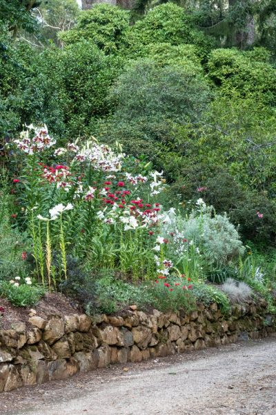 Red, white and silver flower border