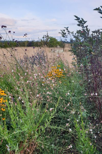 Pollinator-friendly flowers
