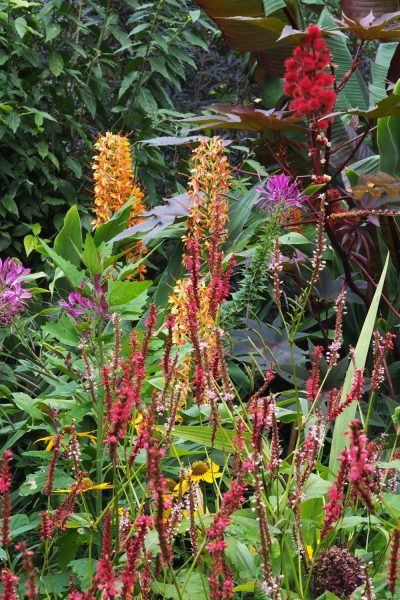 Annuals and perennials in an exotic garden