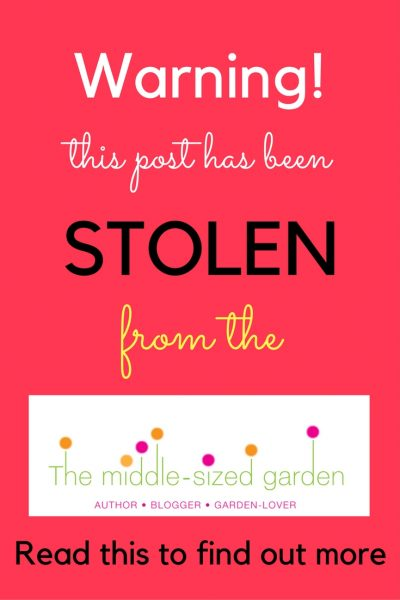 Is your blog being stolen by someone who is 'scraping' your posts? Find out and do something about it.