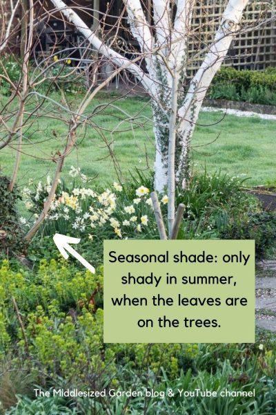 Seasonally shady border