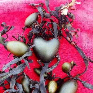 seaweed as fertiliser