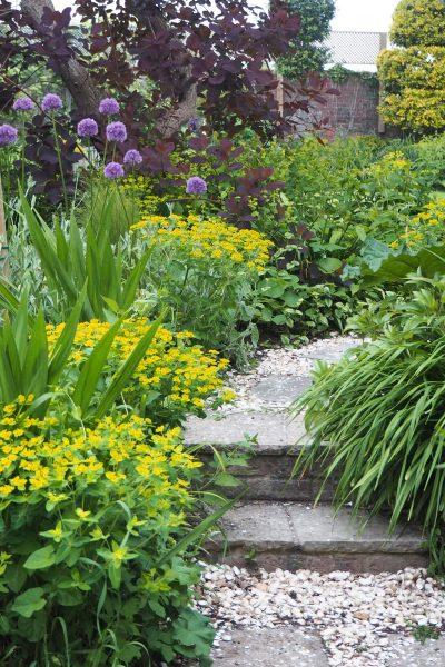Euphorbia oblongata is one of the easiest self-seeding plants